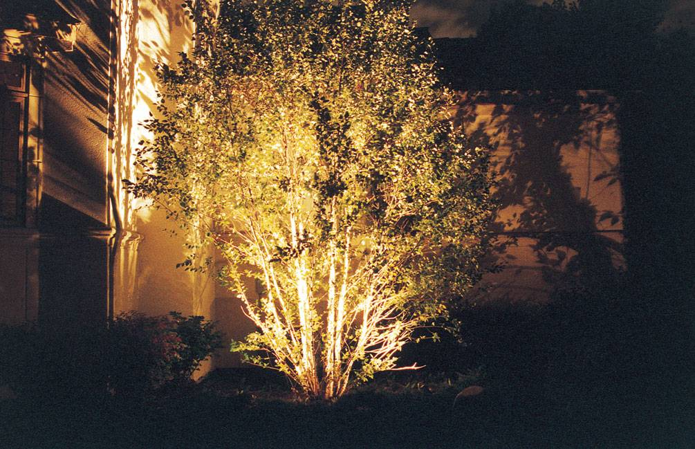 lighting-tree