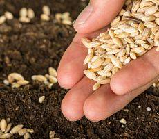 Handful of seeds to plant while gardening