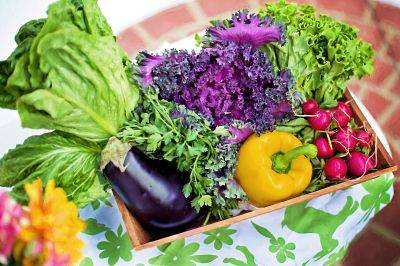 Vegetables picked fresh from a garden.