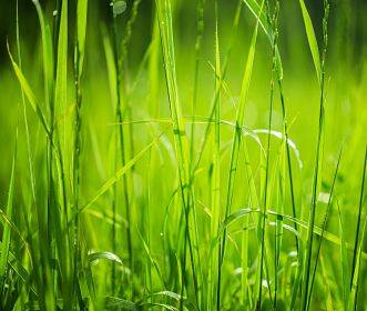Up close view of green grass - choosing a lawn sprinkler system.