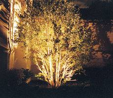 Outdoor lighting used on a tree.