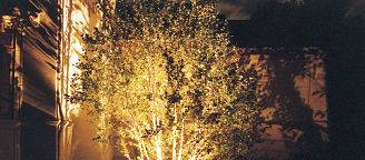 Highlighted tree with outdoor lighting.