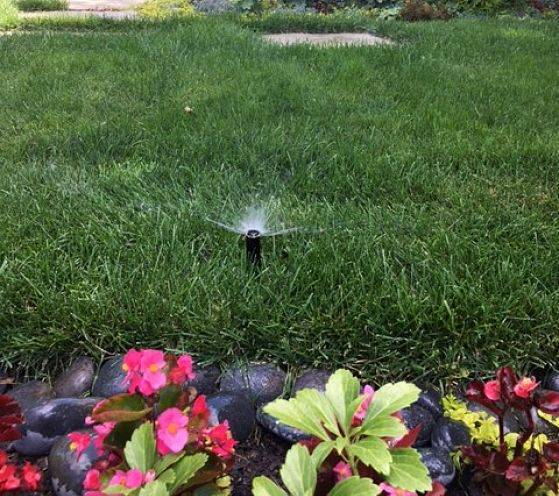 Up close view of a sprinkler from a commercial irrigation system.