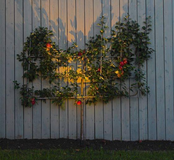 American National landscape lighting design, plant highlights.