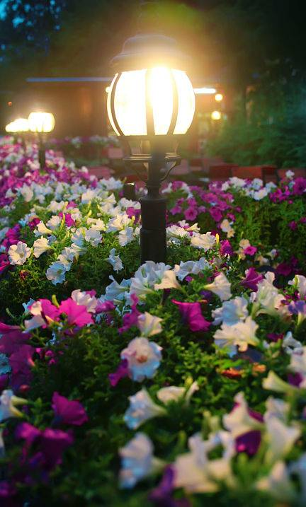 American National offers LED lighting installation for your garden, pathways, and more!