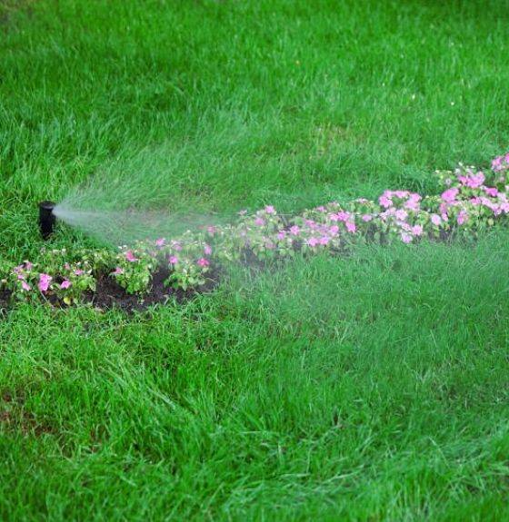 Irrigation specialists set up a sprinkler head near flowers to keep them well watered.