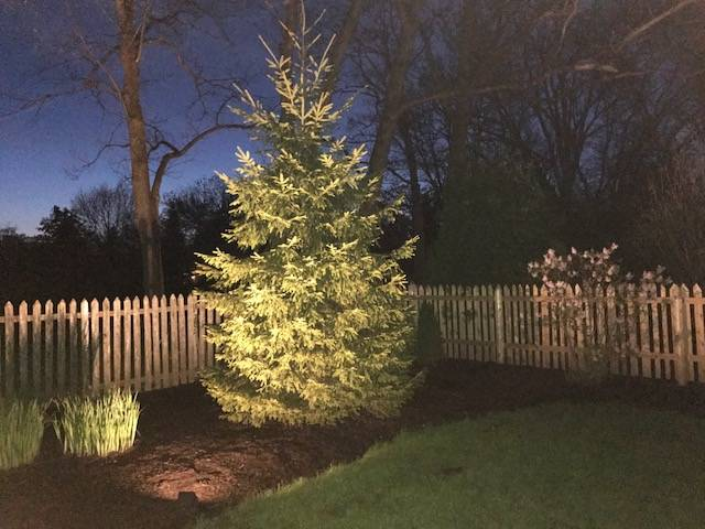 American National's outdoor lighting system highlighting a backyard tree in a suburban home.