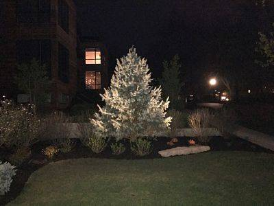 American National's outdoor lighting system highlighting a tree.