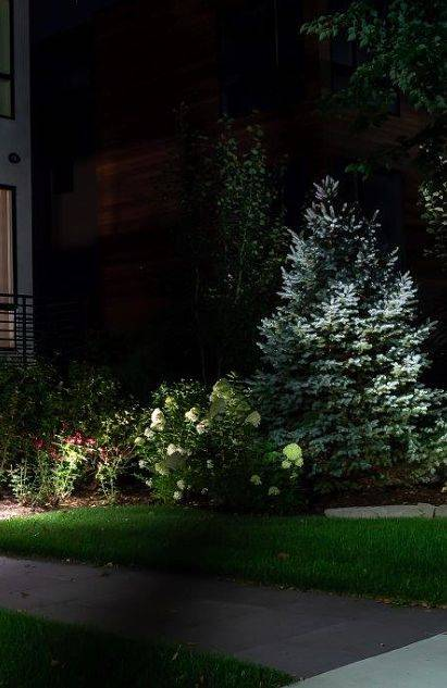 American National Sprinkler & Lighting can set up a low voltage landscape lighting system to highlight plants and trees like this.