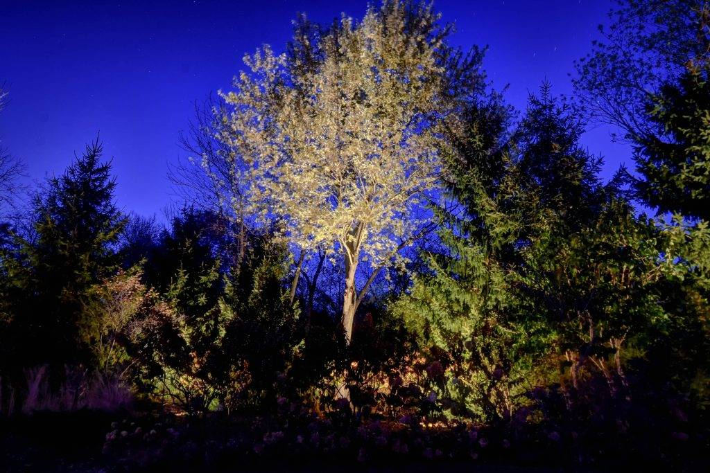 American National Sprinkler & Lighting - automatic lighting system illuminating tall tree in the backyard.
