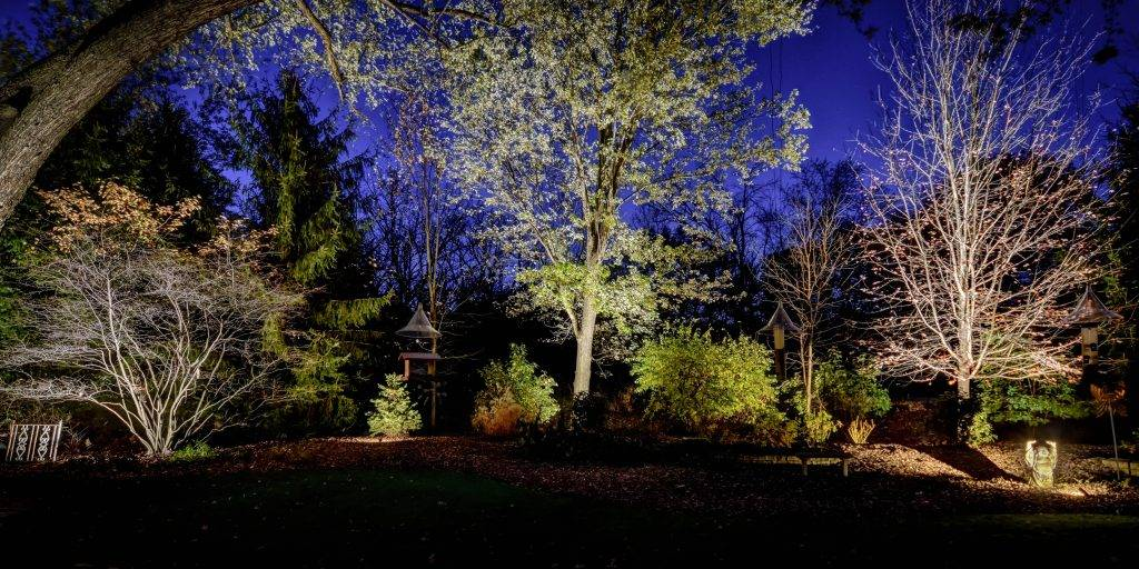 American National Sprinkler & Lighting - automatic lighting system illuminating trees in a backyard.
