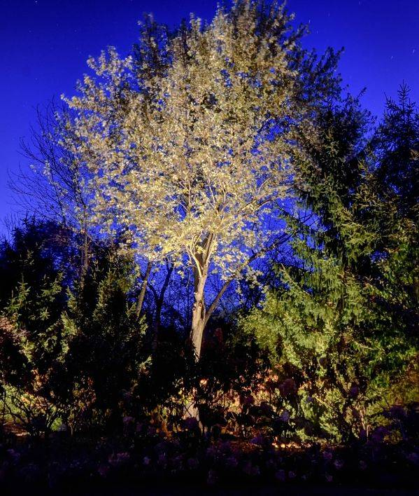 American National Sprinkler & Lighting - best low voltage landscape lighting on a tree in someone's backyard in Winnetka, IL.